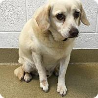 Adopt A Pet :: Dobbie - Miami, FL