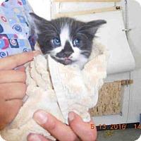 Adopt A Pet :: DUDLEY - San Martin, CA