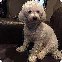 Adopt A Pet :: Shasta 3124 - Toronto, ON