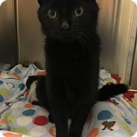 Adopt A Pet :: Estelle - Chicago, IL