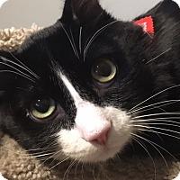 Adopt A Pet :: Noah - Scottsdale, AZ
