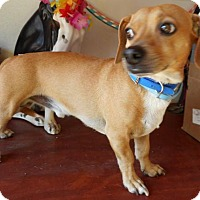Adopt A Pet :: Dutch - Yucaipa, CA