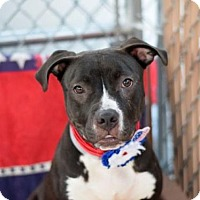 Adopt A Pet :: Nori - Manhattan, NY