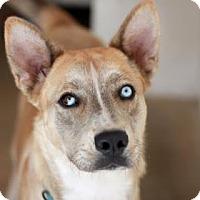 Adopt A Pet :: NADYA - Kyle, TX