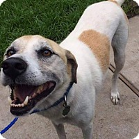 Adopt A Pet :: Lucky - Friendswood, TX