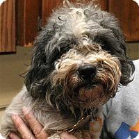 Adopt A Pet :: Precious - Fort Madison, IA