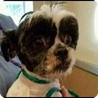 Adopt A Pet :: PANDA - Murray, UT