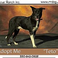 Adopt A Pet :: Teto - Yreka, CA
