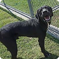Adopt A Pet :: Luther - Irving, TX