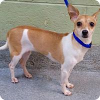 Adopt A Pet :: EVELYNE - Philadelphia, PA