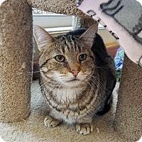 Adopt A Pet :: Phillip - Mountain Center, CA