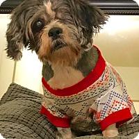 Adopt A Pet :: Percy - New York, NY