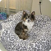 Adopt A Pet :: Princess - Silver Spring, MD