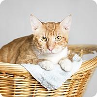 Adopt A Pet :: LB - El Dorado Hills, CA