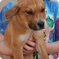 Adopt A Pet :: Biscuit - Mayflower, AR