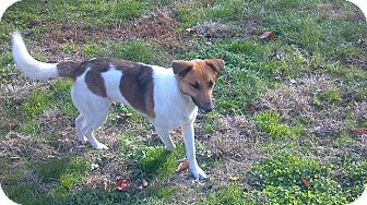 Collie Mix Dog for adoption in Hazard, Kentucky - Colby