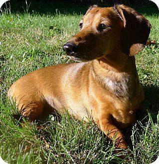 Romeo   Adopted Dog   ...