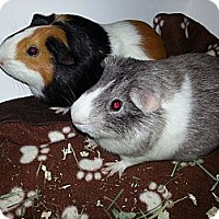 Adopt A Pet :: Buttercup and Trixie - Fullerton, CA