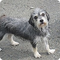 Adopt A Pet :: Coco - Tumwater, WA