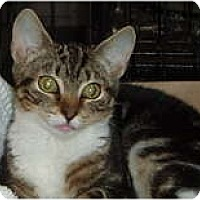Adopt A Pet :: Meriah - Westfield, MA