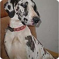 Adopt A Pet :: Dahlia - Providence, RI