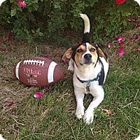 Adopt A Pet :: Dempsey - Homewood, AL
