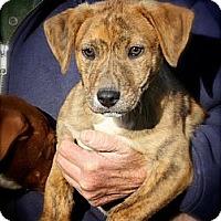 Adopt A Pet :: Tigger - Albany, NY