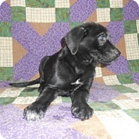 Adopt A Pet :: Blaze - Burlington, VT