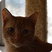 Adopt A Pet :: Jimmy - Maywood, IL