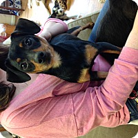 Adopt A Pet :: Carlos - Marietta, GA