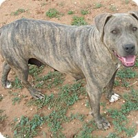 Adopt A Pet :: Lacy - Post, TX