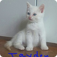 Adopt A Pet :: Jayden - McDonough, GA