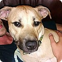 Adopt A Pet :: Tonka S.A.M courtesy listing - Sherman, CT