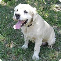 Adopt A Pet :: Winston - Alpharetta, GA