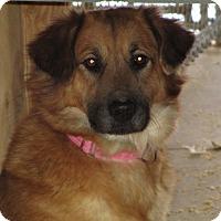 Adopt A Pet :: Tracie - East Hartland, CT