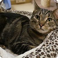 Adopt A Pet :: Jasmine - Salem, NH