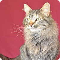 Adopt A Pet :: Phoenix - Larned, KS