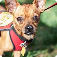 Adopt A Pet :: Seth (Has application) - Washington, DC