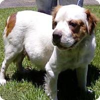 Adopt A Pet :: Bubbles - Gainesville, FL