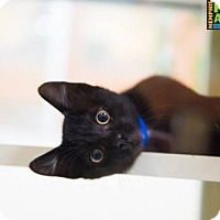 Adopt A Pet :: Snorlax - Memphis, TN