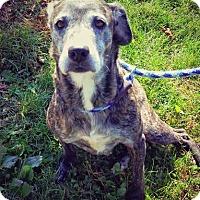 Adopt A Pet :: PUMPKIN - Wintersville, OH