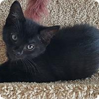 Adopt A Pet :: Squeaky - Horsham, PA