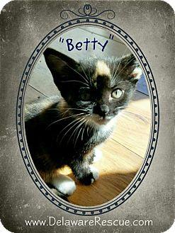Domestic Shorthair Kitten for adoption in Seaford, Delaware - Betty