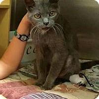 Adopt A Pet :: Bo - Morganton, NC