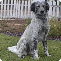 Adopt A Pet :: Greystone - Las Vegas, NV