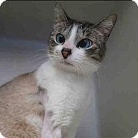 Adopt A Pet :: Puggles - San Juan Capistrano, CA