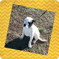 Adopt A Pet :: Patch - Madison, AL