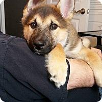 Adopt A Pet :: JETT - Winnipeg, MB