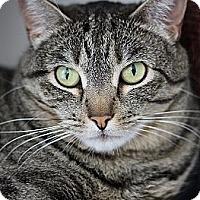 Adopt A Pet :: Blush - El Cajon, CA
