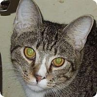 Adopt A Pet :: Alfie - Jacksonville, NC